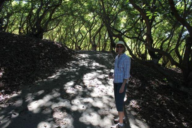 old avocado grove