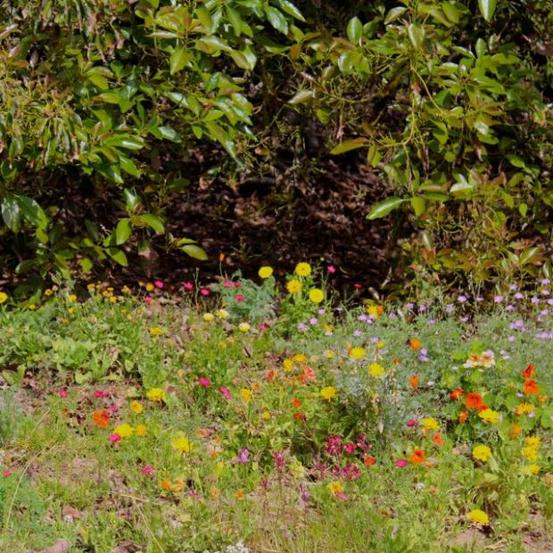 wildflower-garden