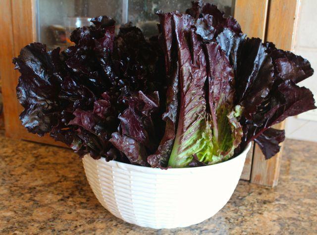 burgundy color lettuce