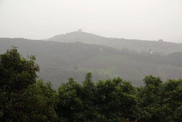 rain-in-avocado-trees