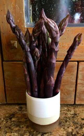 purple spears