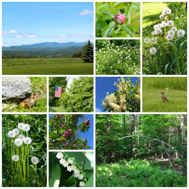 Vermont-June