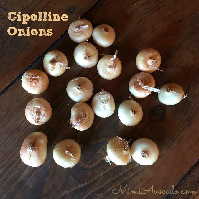 Cipolline Onion