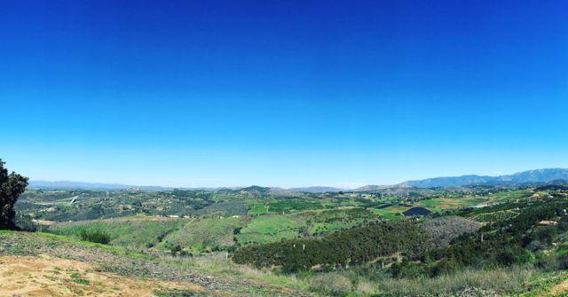 green hills after rains