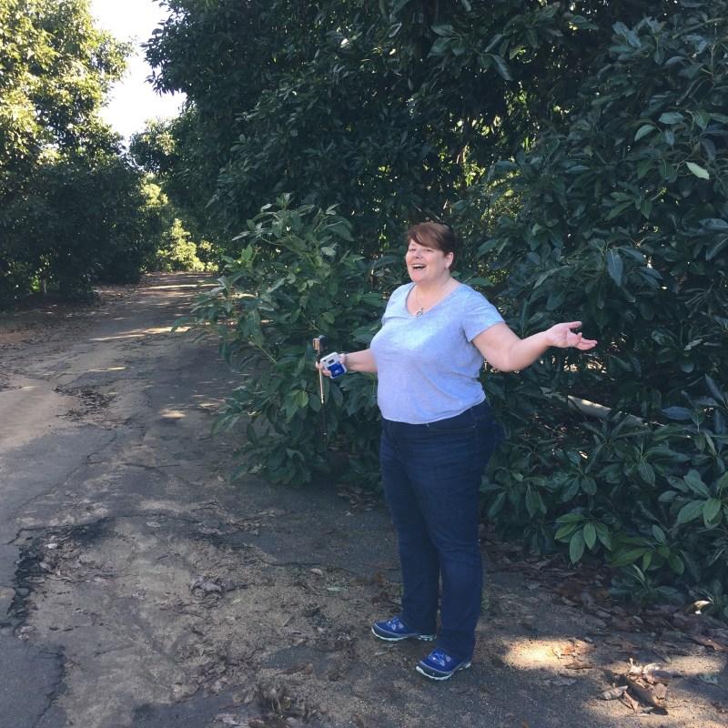 visit to avocado grove
