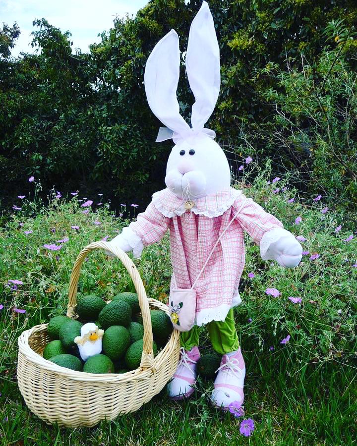 Easter bunny brings avocados