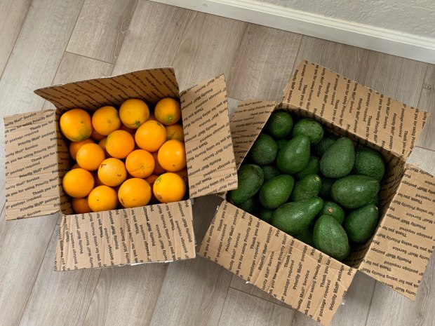 Tangerines and avocados