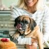 Homemade dog birthday cake. The best dog birthday cake to make at home. Pupcake recipe and a dog birthday cake recipe. Dog cupcake recipe and a dog birthday cake recipe for your next dog party! Safe to eat dog birthday cake made with human ingredients.