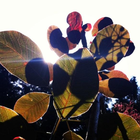 hot garden beja von bis at mimi berlin