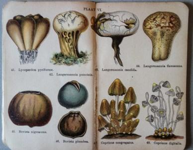 mimiberlin_poisenous_mushrooms_vintage_flora-07888