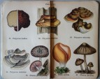 mimiberlin_poisenous_mushrooms_vintage_flora-07893