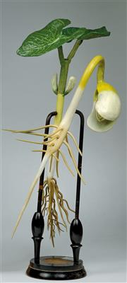 A c. 1900 R. Brendel Berlin botanical Model the bean germination, painted papermache, plaster and wood; the leaves probably replaced later out of plastic (?), on turned wood stand with non matching paper description label. Height c. 55 cm. (WU).
