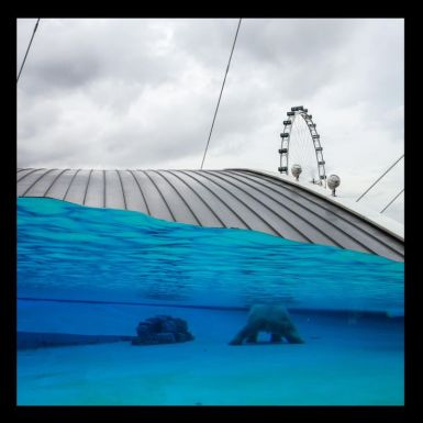 Ice Bear in Singapore
