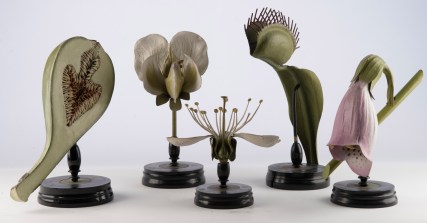 Selection of Brendel papier mache teaching models. Photograph from RBGE collection