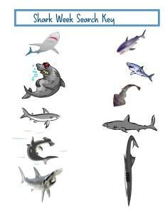Shark Search Key