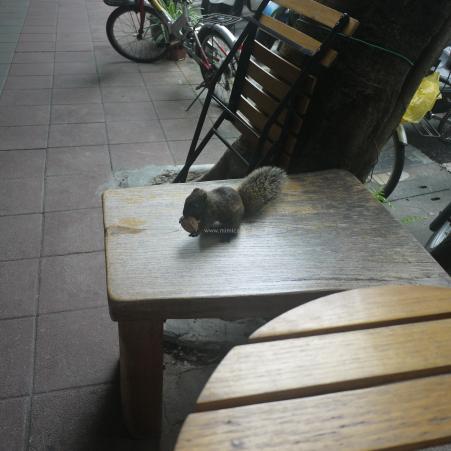 馬札羅 民生 りす 台北のおすすめカフェまとめ mimicafe.tw