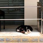 ホイッスルが響き猫はうたた寝。2020年3月なかば、台北の日曜日。