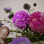 今年は春節の花市場も少し様子が違う気がする。