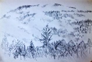 The crow tree pencil 3.08.16