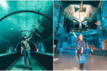 澎湖景點 澎湖水族館:波浪海堤/鯊魚餵食秀/海底隧道,內外好玩必拍亮點大公開!