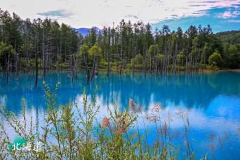 【北海道】美瑛青池:必訪美瑛富良野青い池絕景,交通Mapcode&周邊景點分享