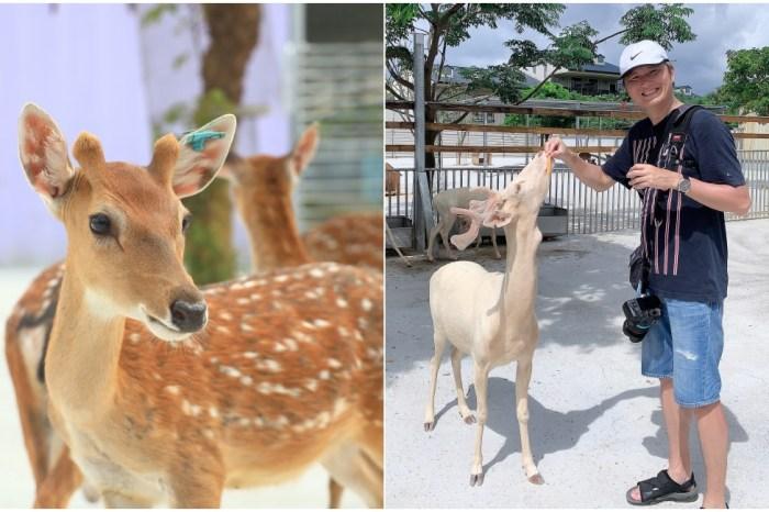 小琉球 鹿粼梅花鹿園區:小鹿斑比面對面好玩景點推薦!鹿粼門票事先買更優惠~