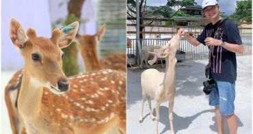 小琉球|鹿粼梅花鹿園區:小鹿斑比面對面好玩景點推薦!鹿粼門票事先買更優惠~