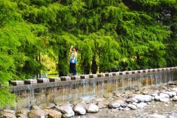 花蓮壽豐 雲山水夢幻湖(免門票景點):落羽松秘境&跳石步道,有熊的森林住宿更美好