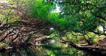 【台南景點】四草綠色隧道(附搭船票價&交通):台江國家公園絕美倒影畫面天使之吻