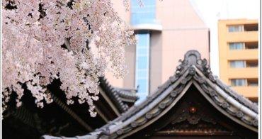 京都賞櫻景點》六角堂 X 星巴克:坐在Starbucks喝咖啡就能賞櫻花,再愜意沒有了。