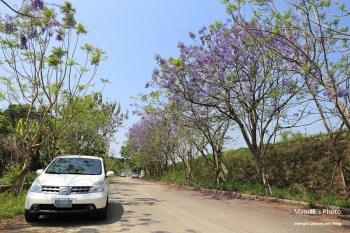 【嘉義景點賞花】藍花楹隧道,圓林仔社區油桐花:春天就是愛賞花,兩種美麗色彩一次滿足~