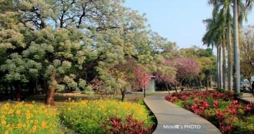 【台灣.台南】中山公園賞花(3月):百花盛開、燦爛美麗的季節~ 苦楝、羊蹄甲