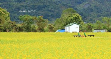 【花蓮景點】大農大富平地森林園區:花東縱谷間出現的蓊鬱森林、美麗花海~