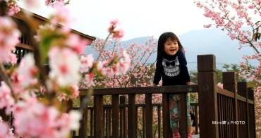 【南投景點賞花】鹿谷小半天石馬公園:粉紅色の河津櫻盛開~ 花落不等人,快來賞櫻花吧~