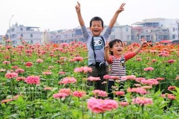 【高雄景點賞花】繽紛亮麗的2013橋頭彩虹花海,花兒已經綻放,大家賞花了嗎!?