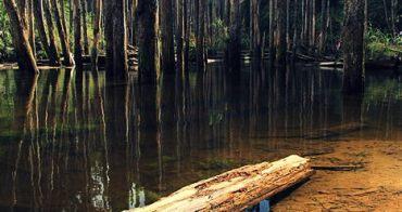 【南投景點】必訪!絕美忘憂森林:921地震展現的破壞與重生美景,建議非枯水期來訪。