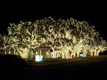 Christmas Lights Johnson City, TX 2