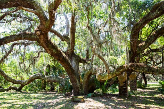 cumberland-tree