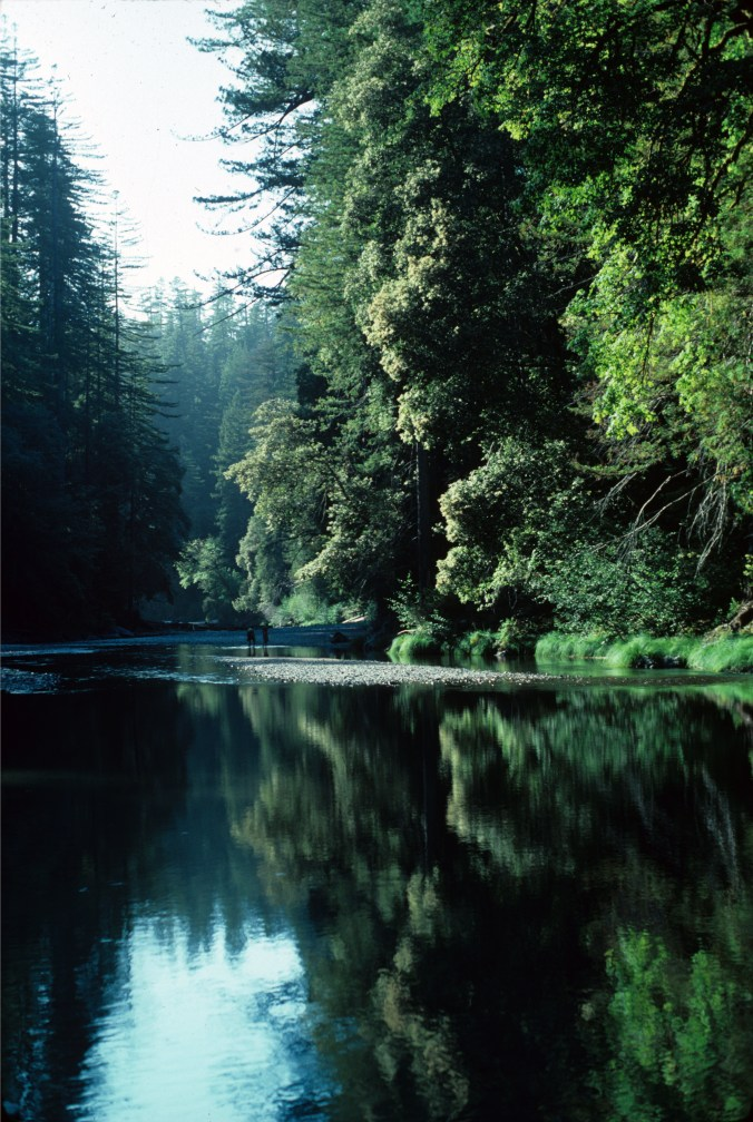 Redwoods lake