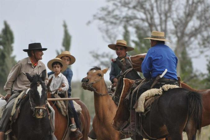 horses argentinean