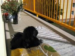 Gimlík pozoruje svet :)