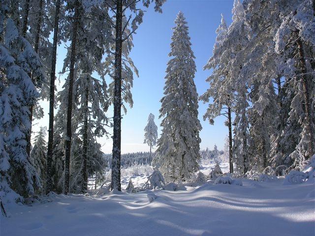 solig-vinterskog_mellan