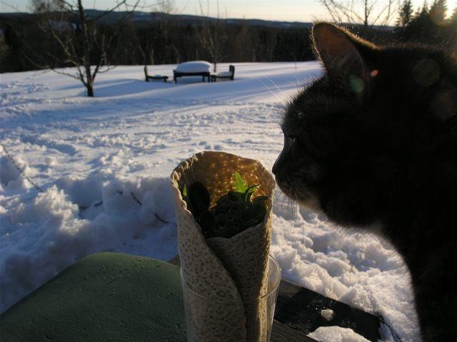 tunnbrodsrulle-katten_mellan