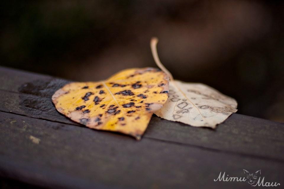 leafheart