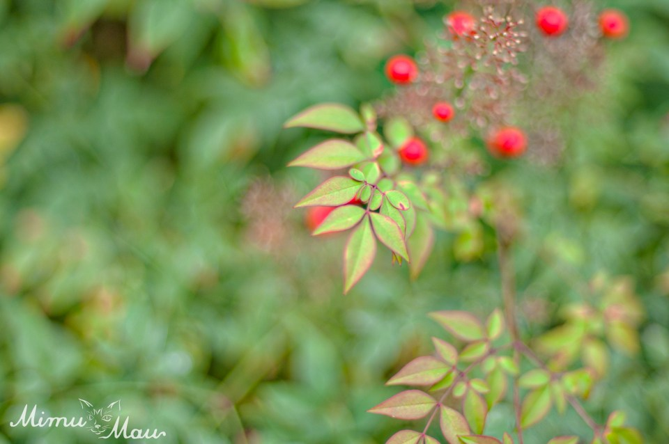 redberryleaves