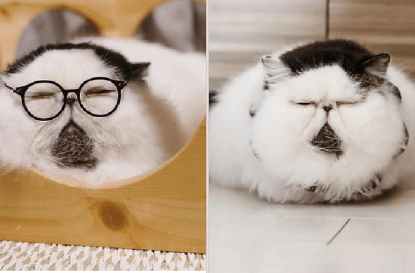 Conoce a este hermoso gatito con una mirada que cautivo a muchos internautas