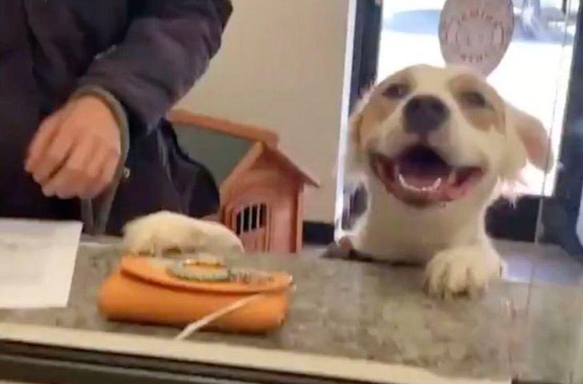 Este lindo perrito se muestra muy feliz, porque sabe que ya fue adoptado (VIDEO)
