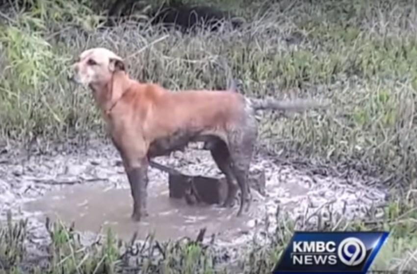 Triste perrito lloraba desconsoladamente tras ser abandonados por sus dueños dentro de unos matorrales