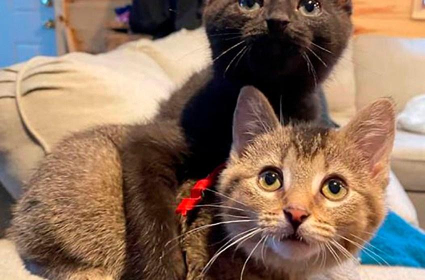 Gatitos fueron encontrados abandonados en un establo, uno de ellos tenía las patitas dobladas