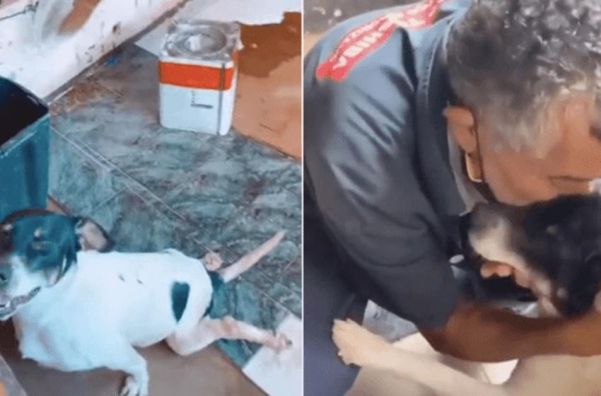 """Amoroso anciano decidió hacer un """"caminito especial """"a su perro que sufre de la columna y así evitar que se lastime"""